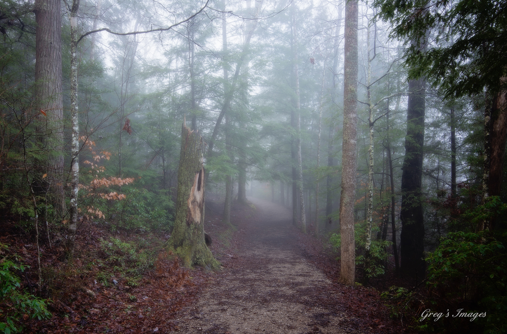 The trail at Yahoo Falls in the morning mist.