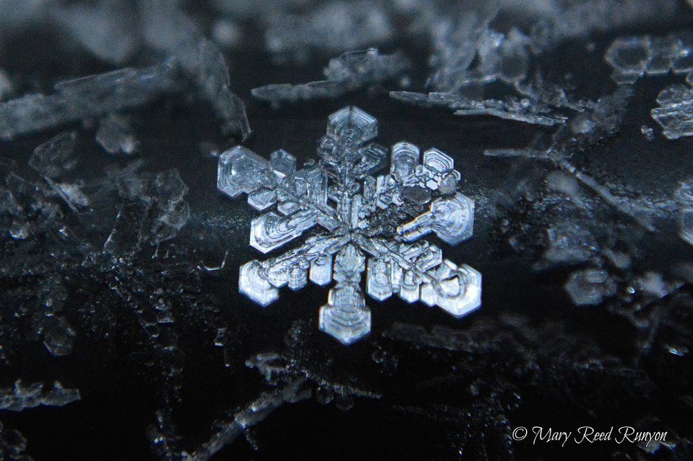Beautiful macro photo of a snowflake. Pike County, Kentucky  Photo via Mary Reed Runyon