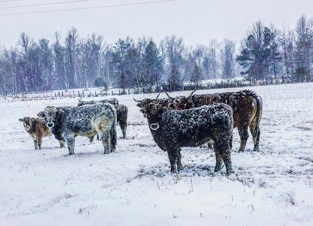 """""""Snow Day at The Watson Family Compound and all across The Bluegrass State""""West Paducah, Kentucky Photo via Instagrammer @amwatson"""