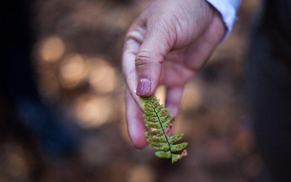 quiet trails leaf.jpg