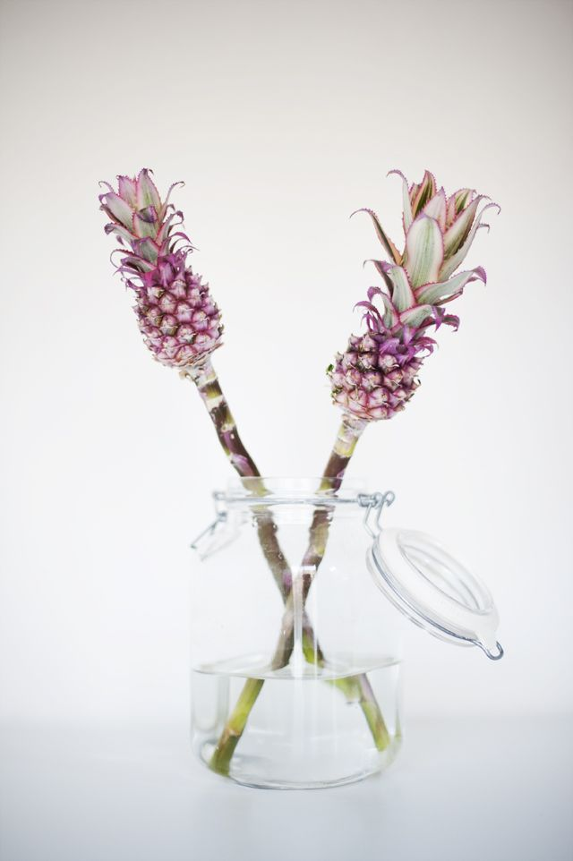 DO:  Decor your summerhouse with an old jar and two wild pineapple flowers.