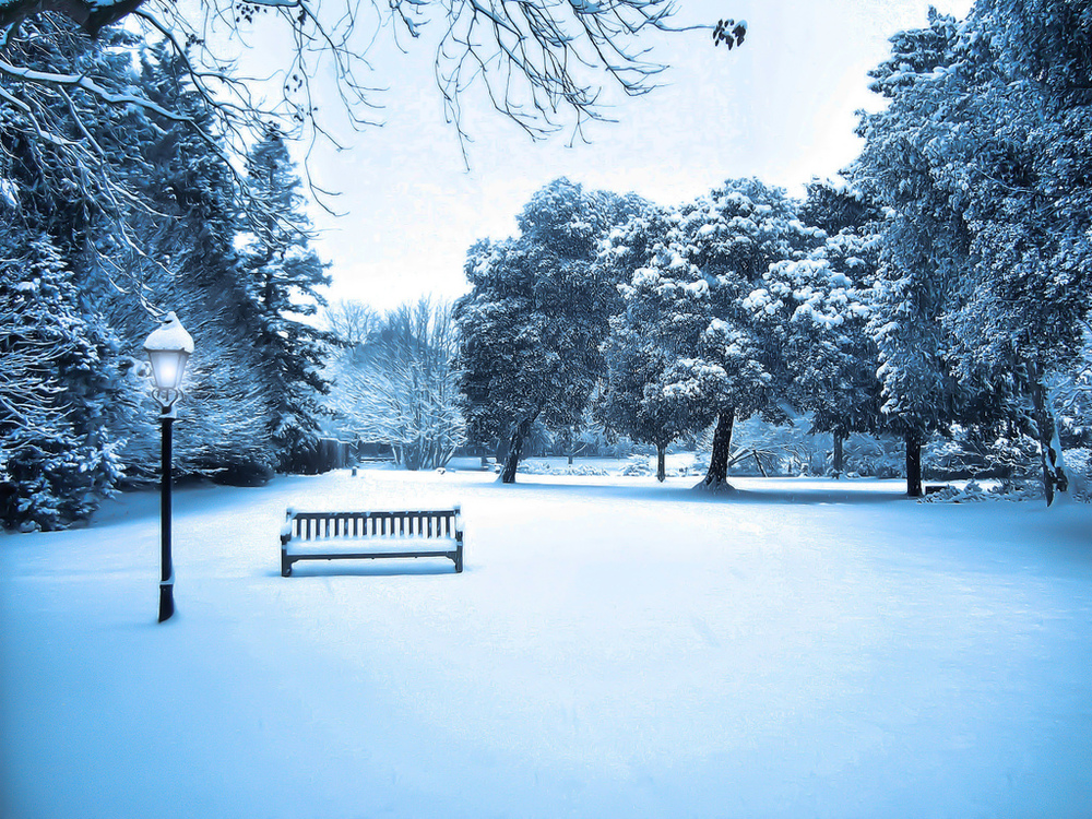 -We All Wish For Narnia In Our Own World - Syon Park Winter Snow London- by Simon %26 His Camera - Flickr - CC BY.jpg