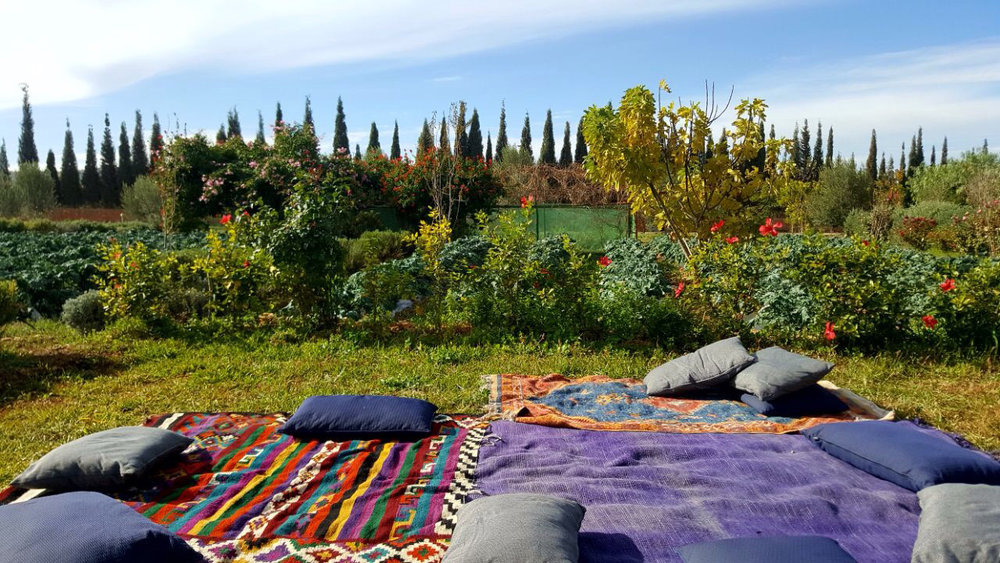 bbio-organic-picnic.jpg
