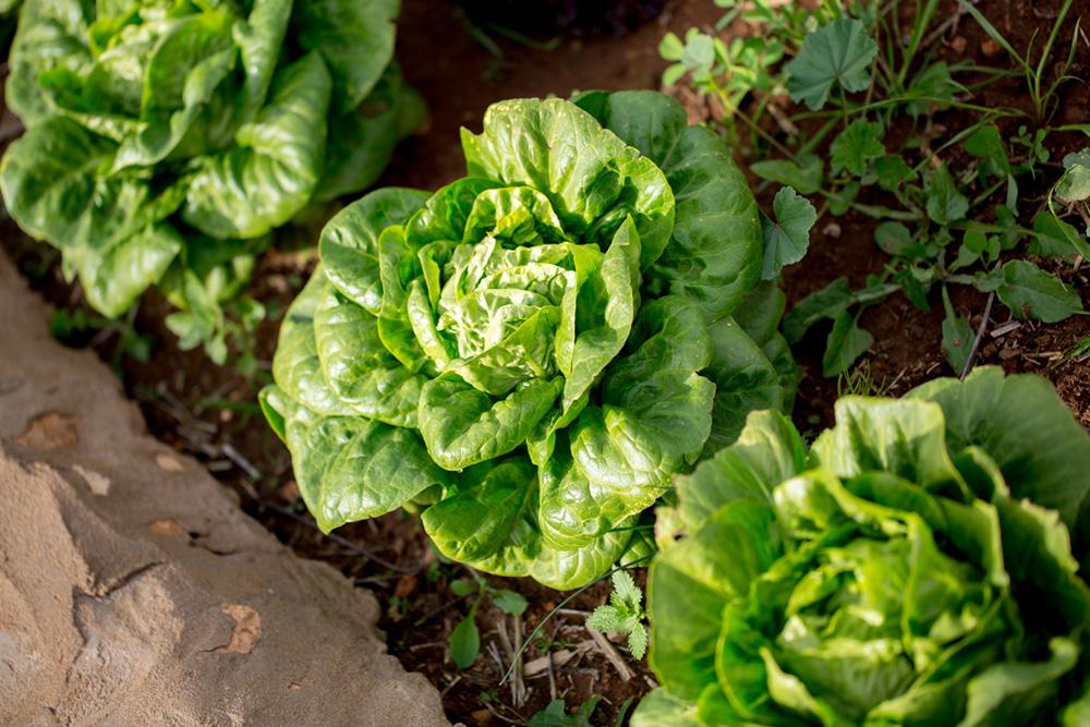 bbio-organic-salad.jpg