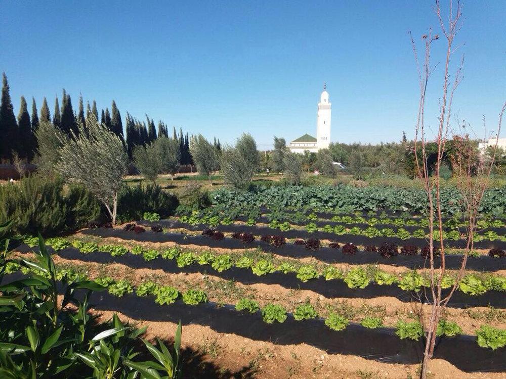 bbio-farm-essaouira.jpg