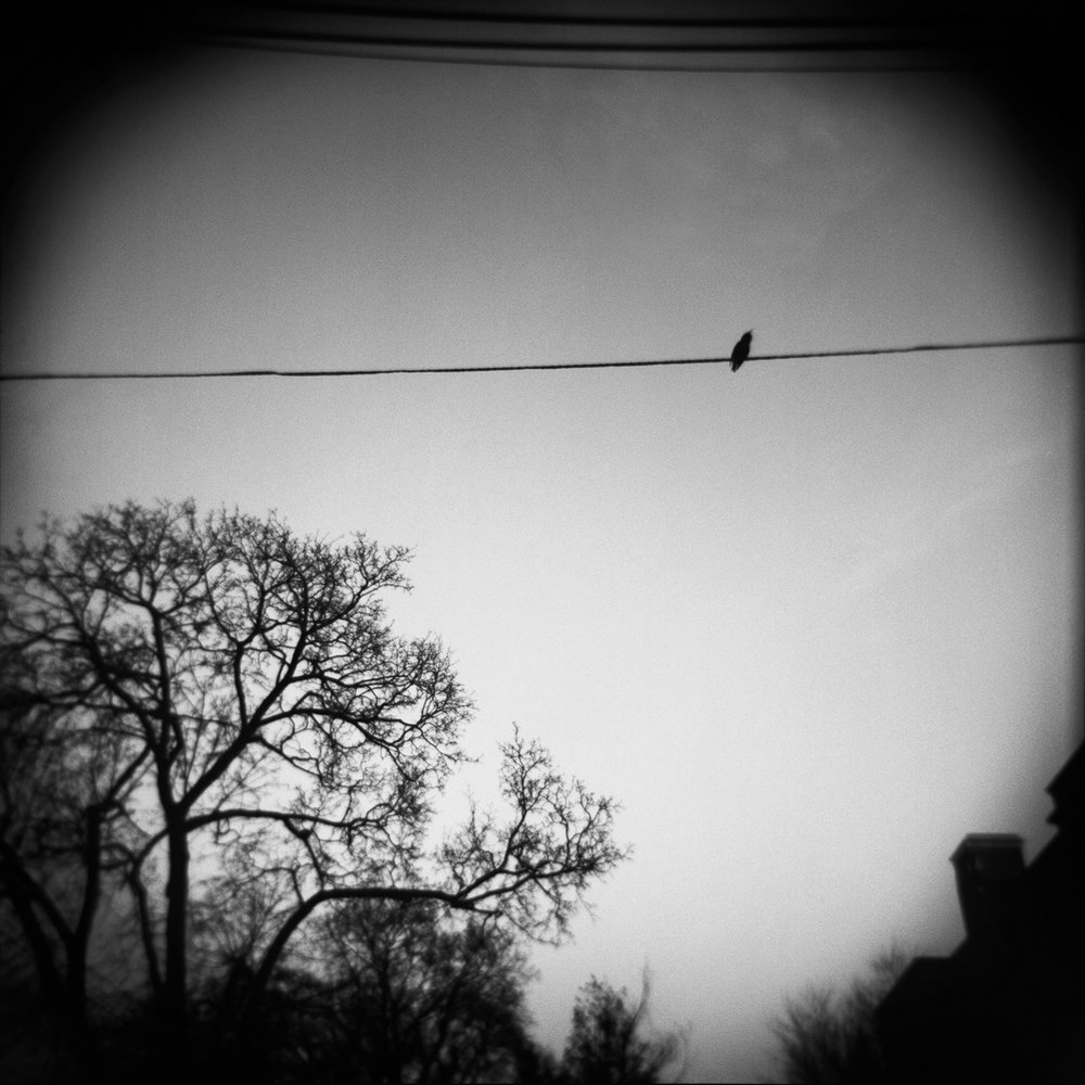 "Bird on a Wire  12""x12"" - Black & White C-Print - $250 - 25 editions"