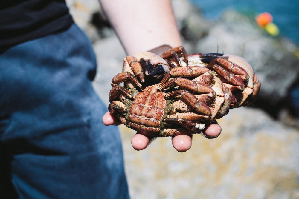 crab-8.jpg