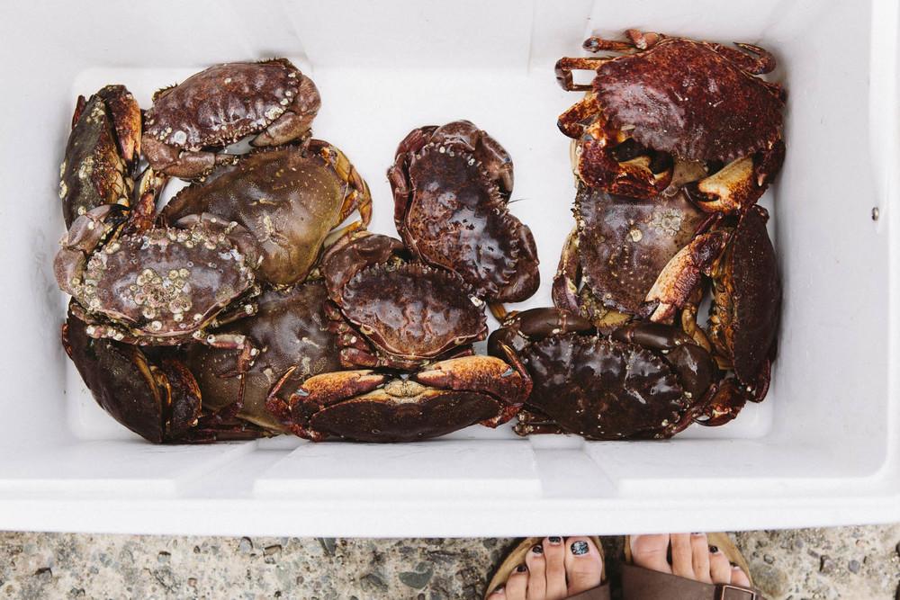 crab-10.jpg