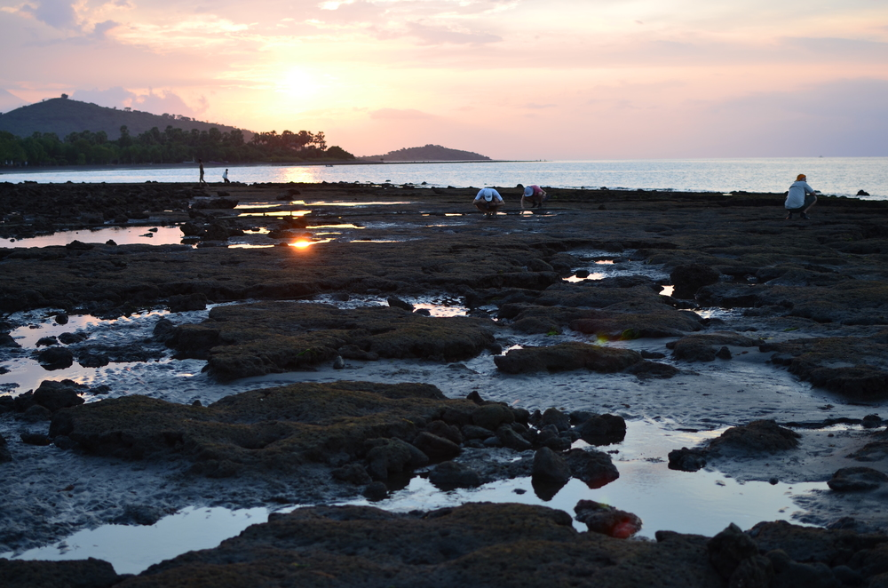 Students hunt for invertebrates in the tide pools of Pemuteran, Bali, Indonesia