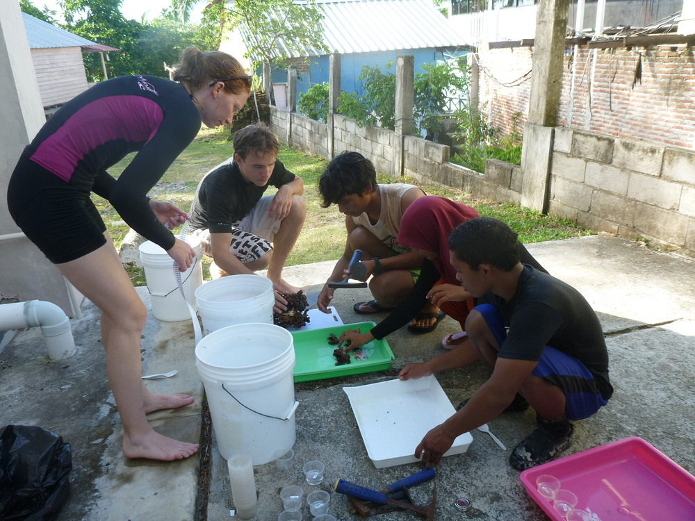 Sampling on Pulau Weh, Sumatra, Indonesia