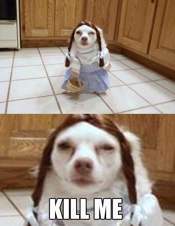 kill-me-dog.jpg