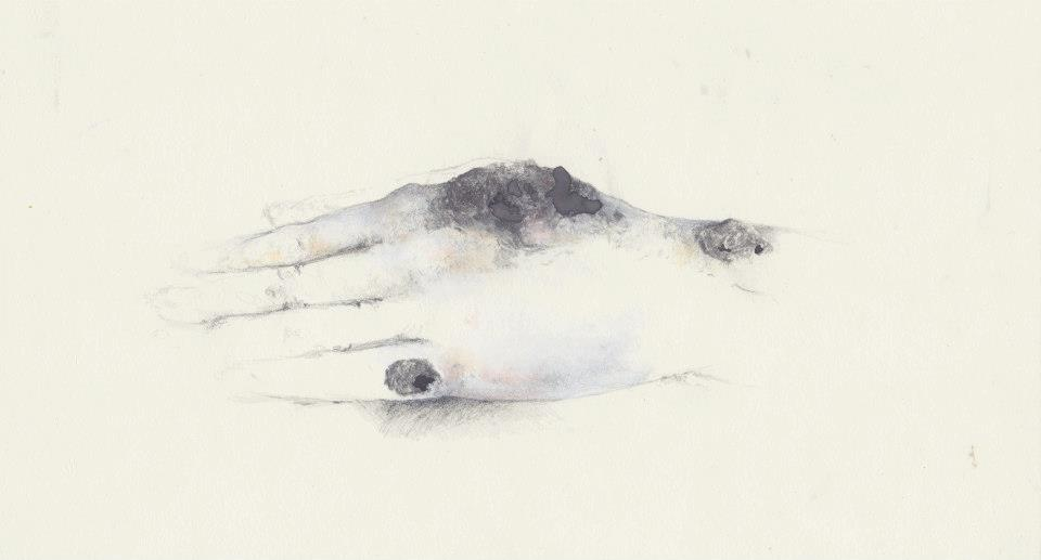 lepra nigrans (2011)