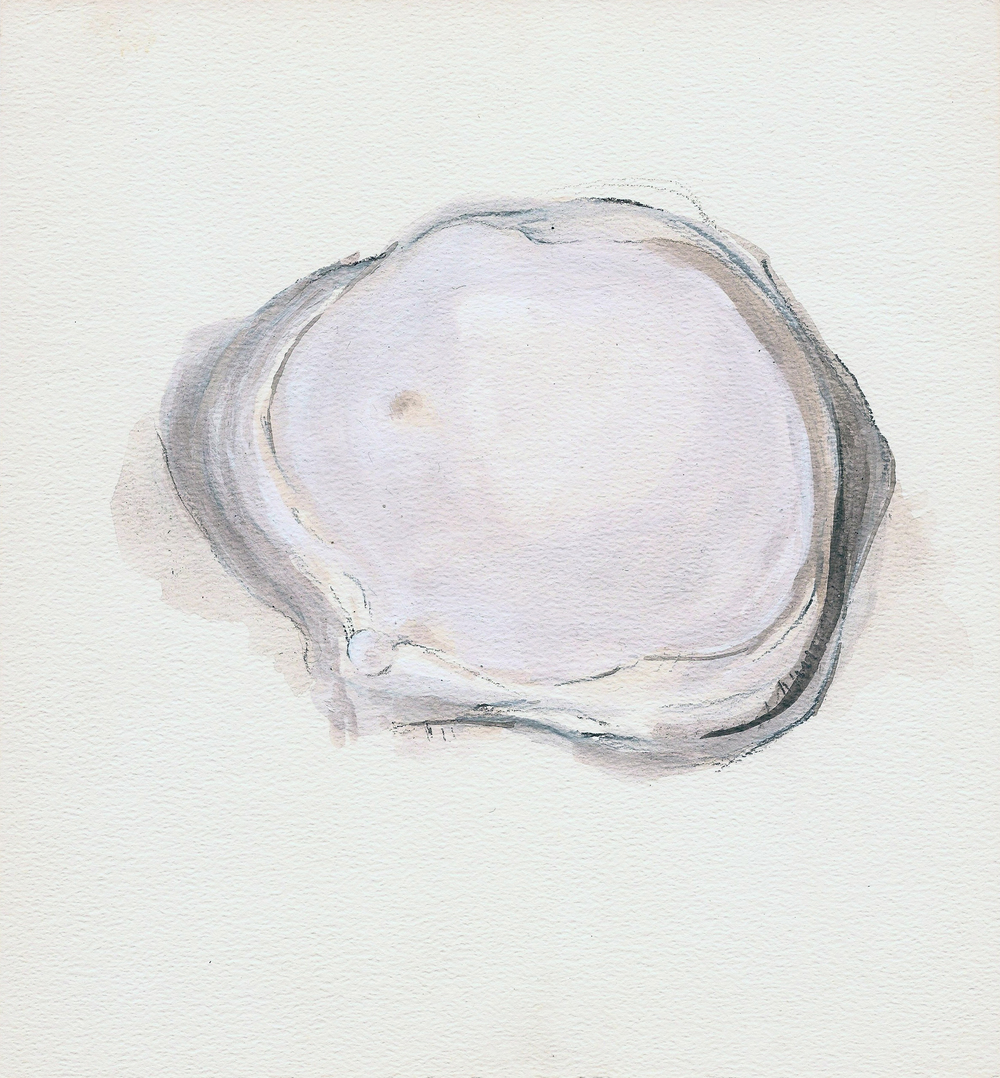 coquillage II (2011)