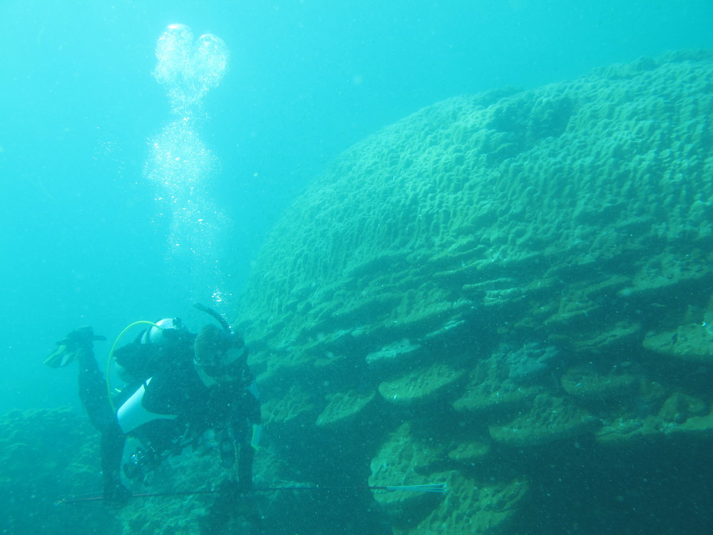 An especially large coral in Myanmar
