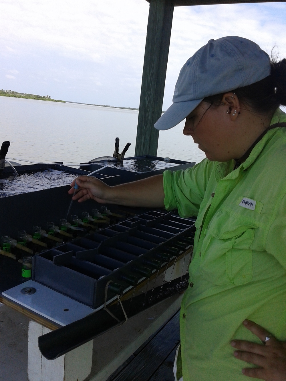 Dr. Lunt running bivalve field assays