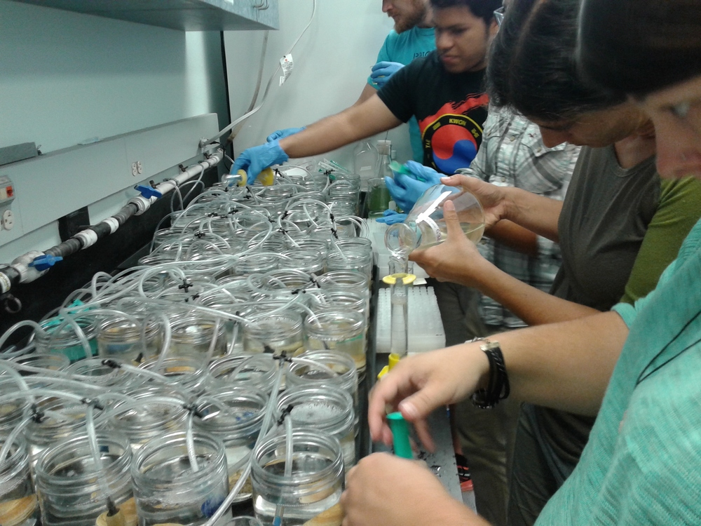 Bivalve feeding assays with Dr. Jessica Lunt and Dr. Eve Galimany at the Smithsonian Marine Station