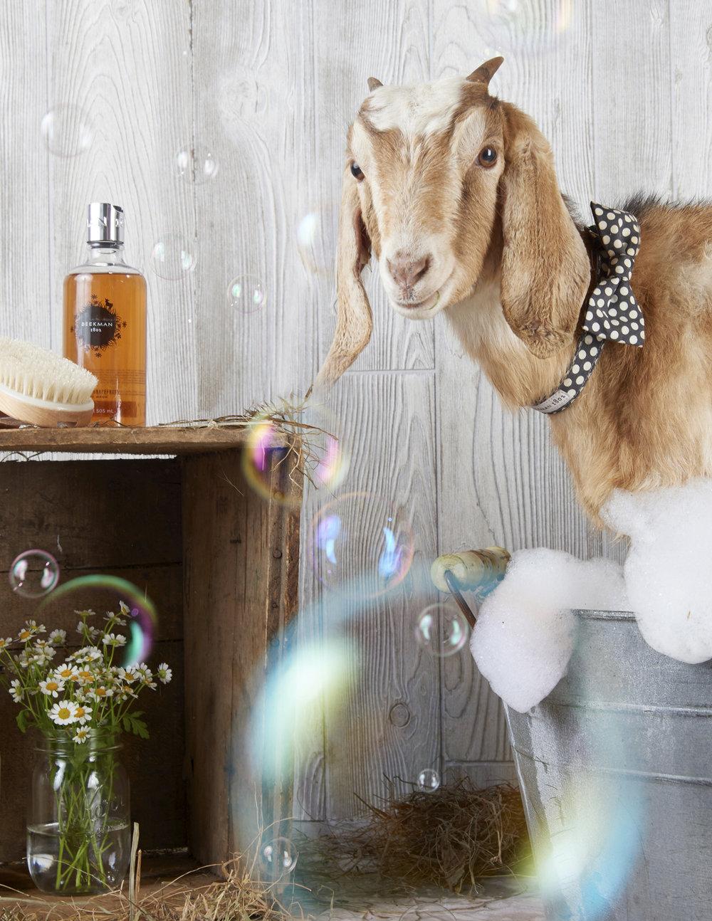Website_Vertical_0017_Beekman 1802 Goats17319.jpg