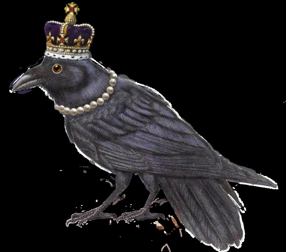 butterLONDON_Graphic_Branwen the Raven-transparent.png