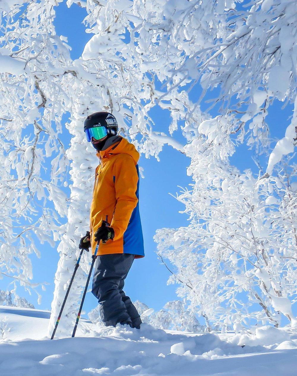 Pure Snow Hokkaido Jacket - Saffron/Notice