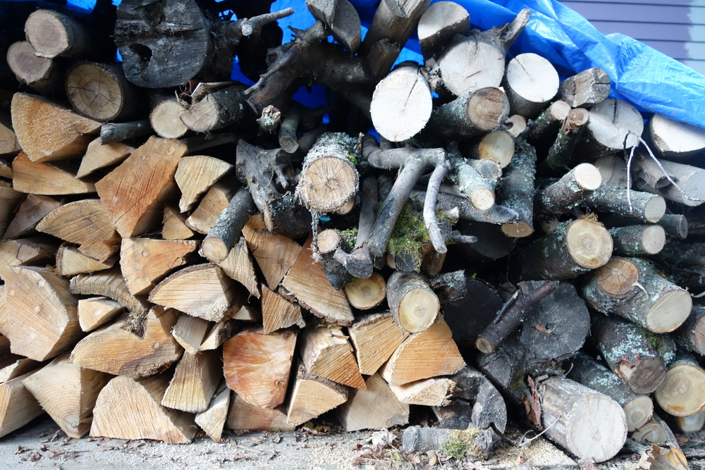 Pig Wood