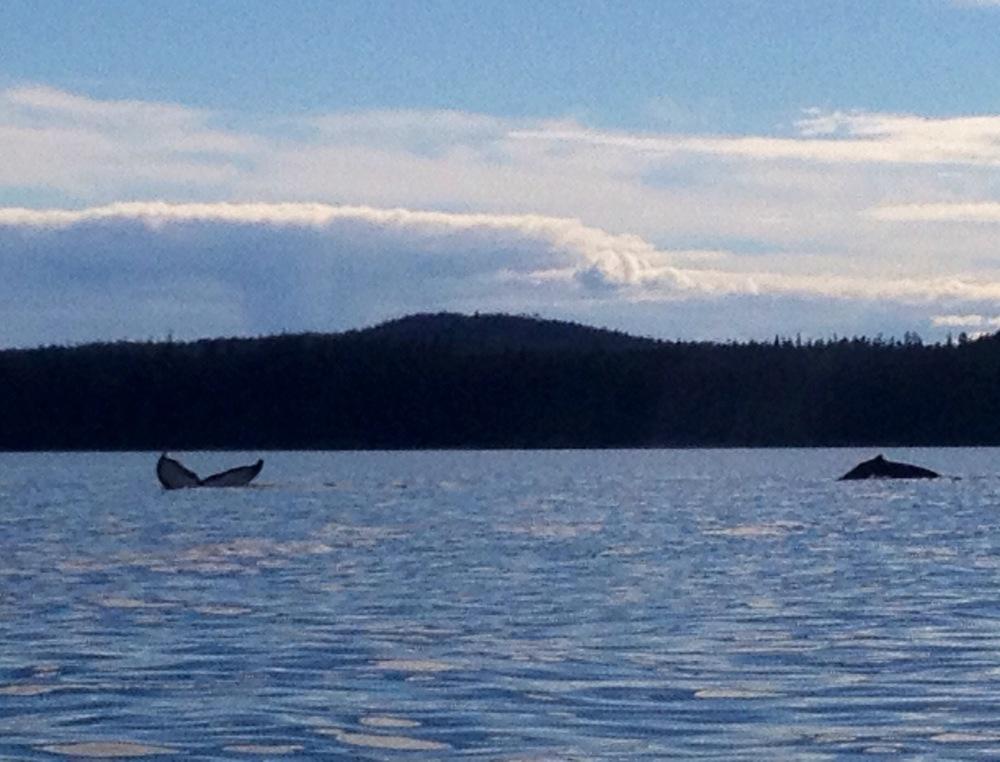 Whale watching in Juneau Alaska Martie Duncan