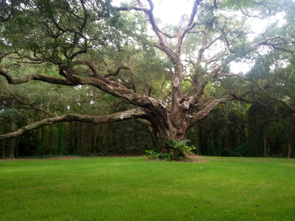 Majestic live oak trees are found all over Fairhope, Alabama
