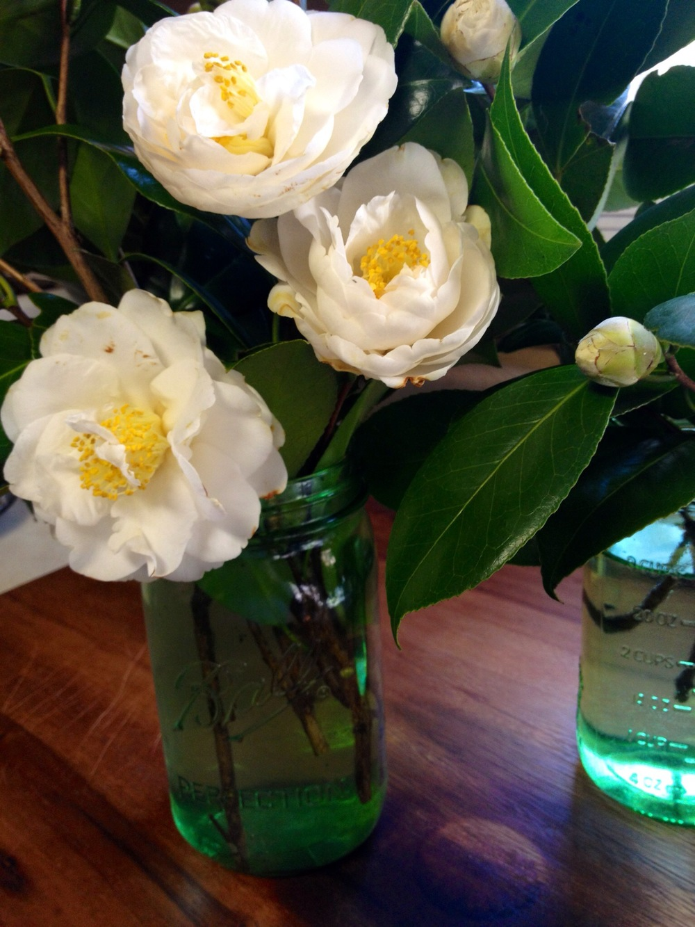 how to force buds to bloom for easy an centerpiece Martie Duncan