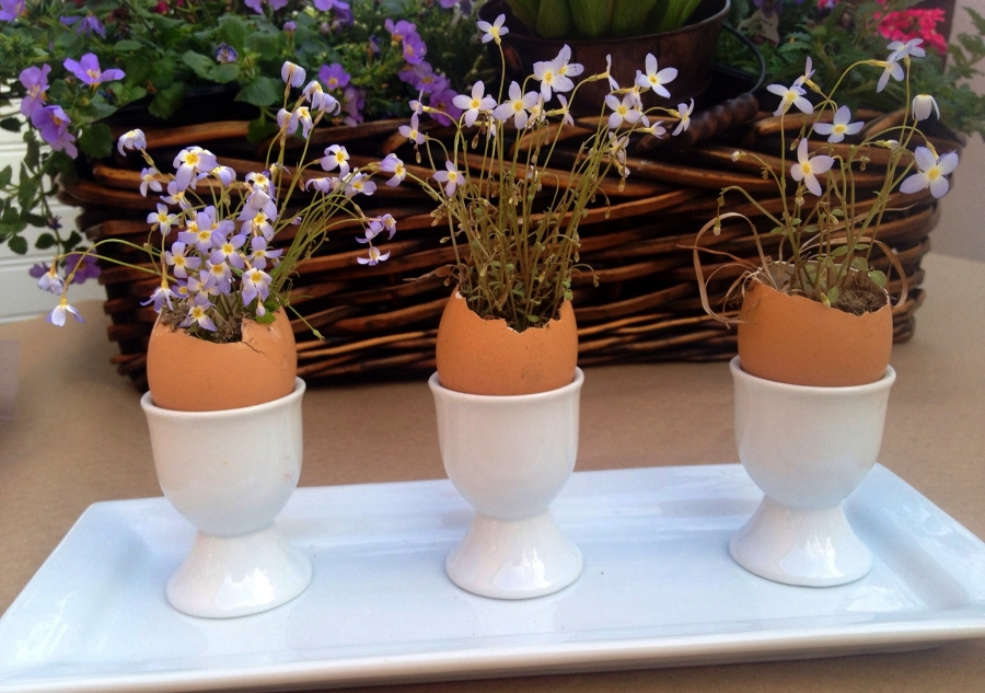egg cups hold pretty wildflowers from the yard