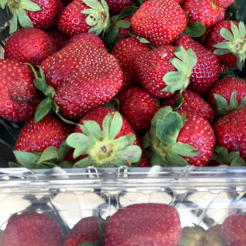 Blount County Alabama strawberries