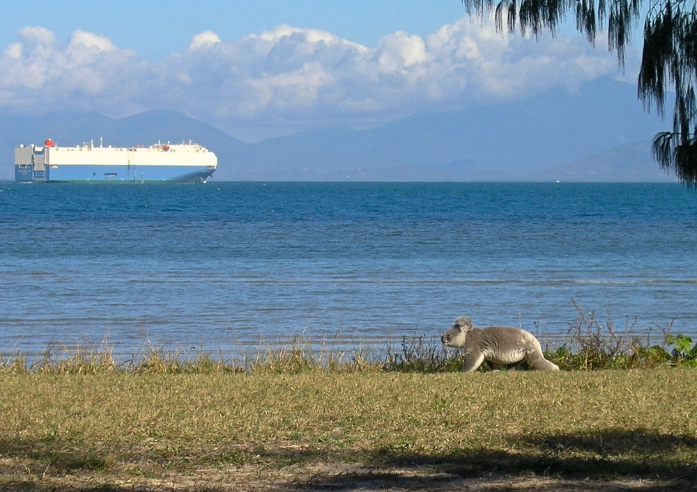 koala walks past car ship.jpg