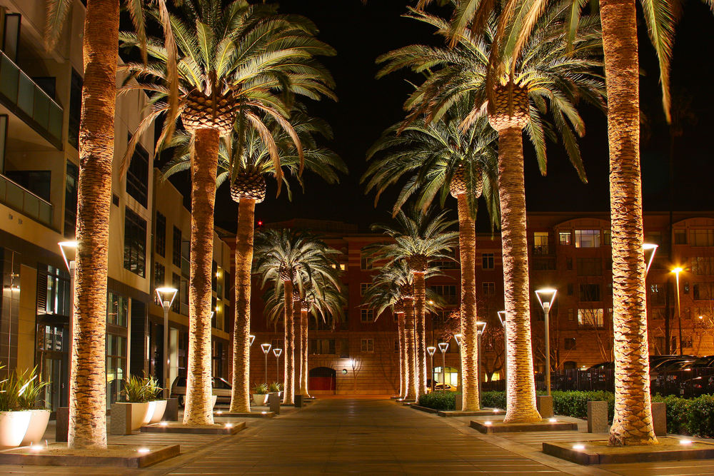 SAN_JOSE_CALIFORNIA_PALM_TREE_2010.jpg