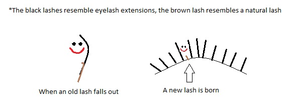 Lash Growth Cycle