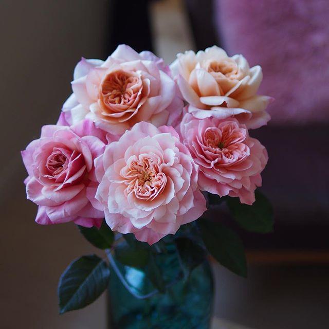 これぜんぶ同じ薔薇なんだけど、ピンクからアプリコットまで色々ですごく綺麗ね!