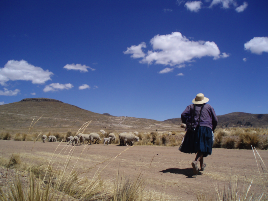 Picture of a Quechua speaking woman herding sheep that I interviewed in Paucarcolla-Collana district (Puno). The woman was supportive of the use of Quechua in school. She was disappointed with the fact that the younger generation was prioritising the use of Spanish over Quechua. Photo by Martina Tonet.