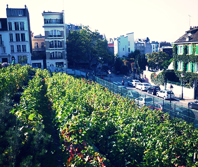 Visit and Tasting of Clos Montmartre