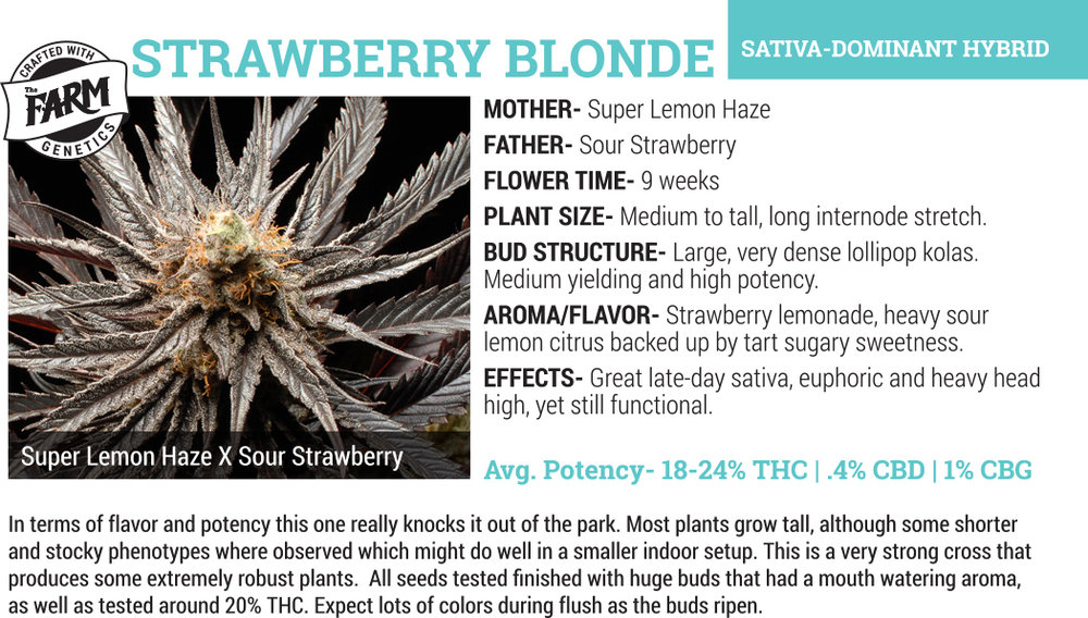 strawberry blonde cannabis flower for sale