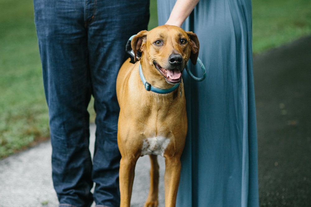 engagement photos with dog.photo session with a dog.dog photos