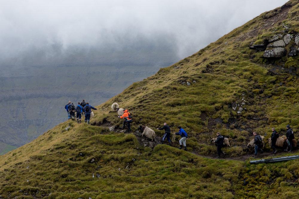 shepherds-12.jpg