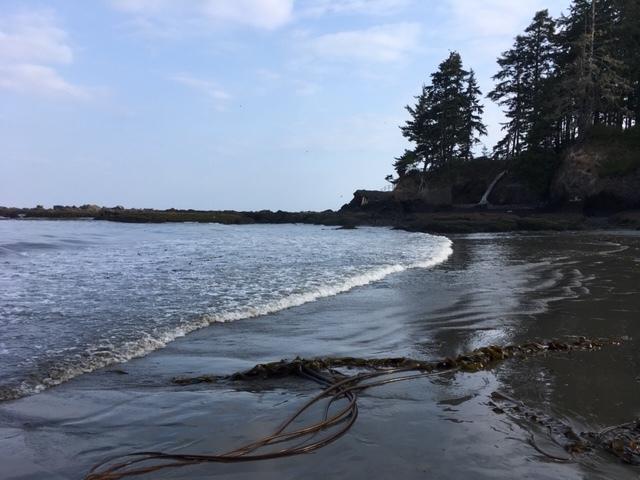 Kelp on Beach.JPG