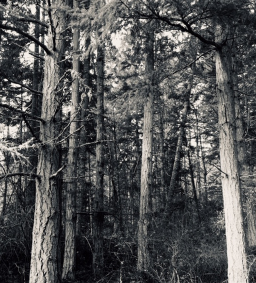 Trees+photo.jpg
