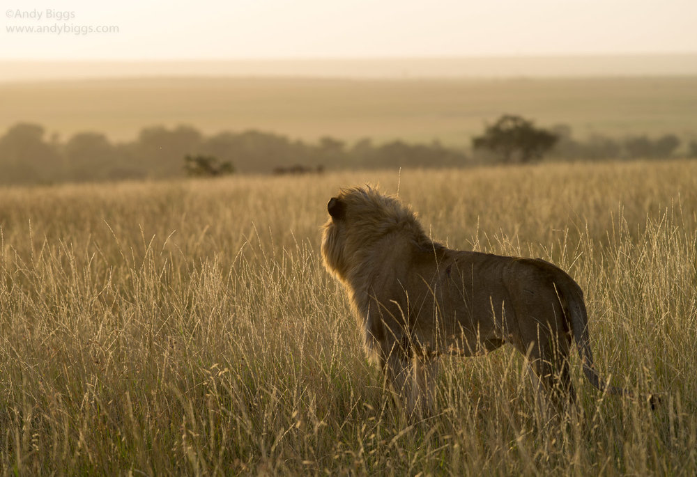 Abiggs_03102012_Mara Plains082.jpg