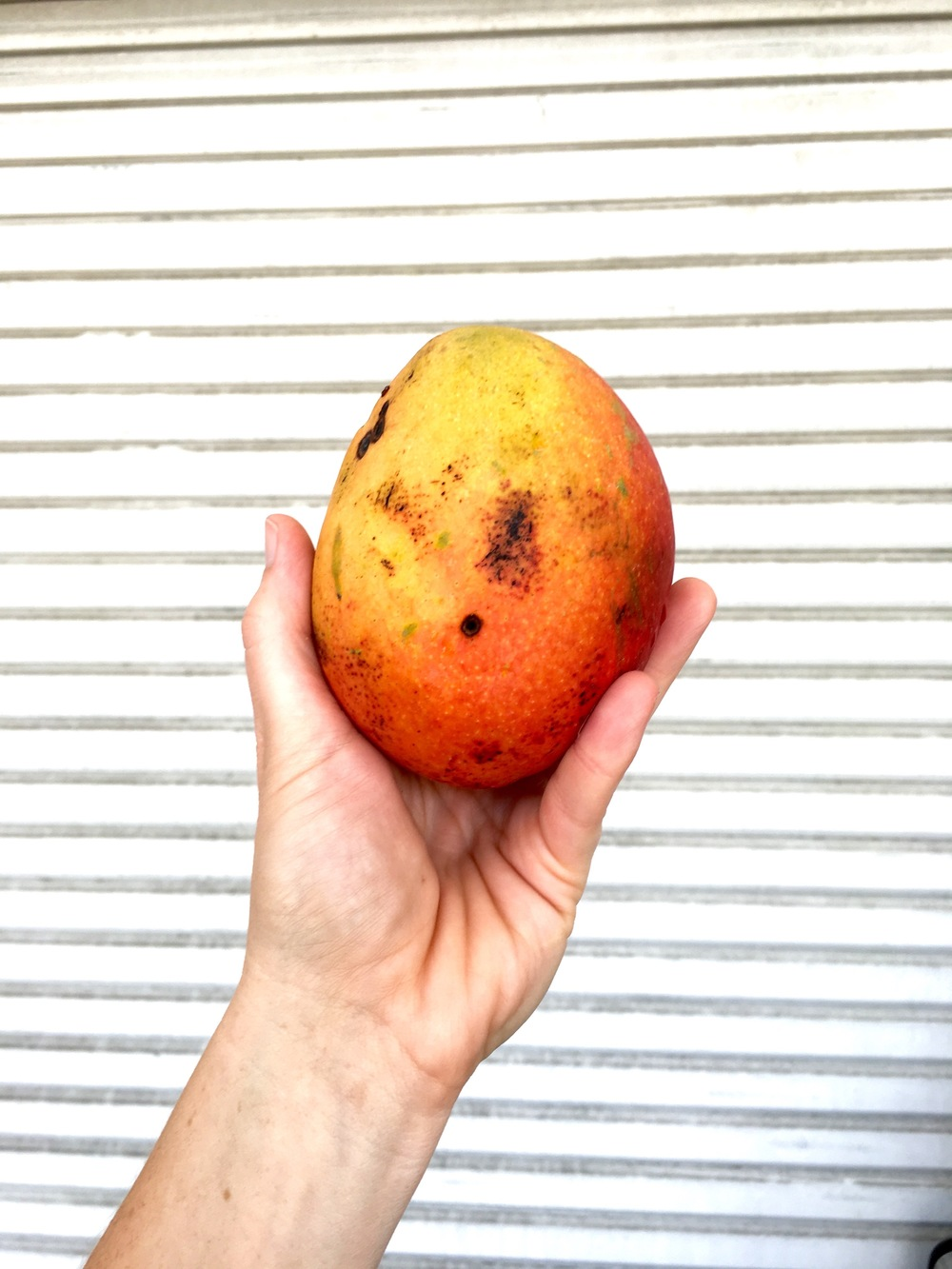 Florida Mangoes delivered by Urban Folk Farm, placed in our pops, delivered to your door.