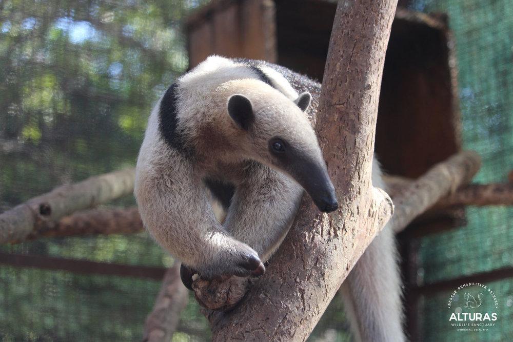 Photos: Alturas Wildlife Sanctuary