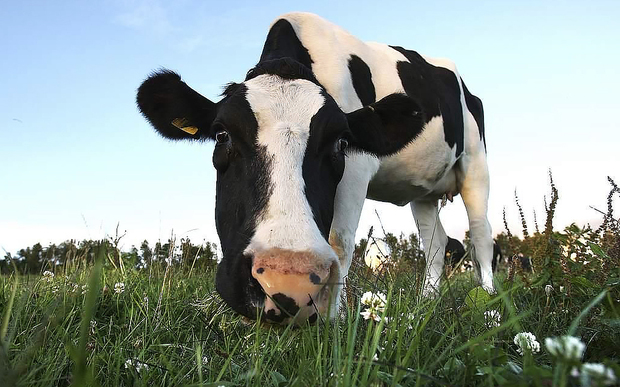 At Nectar we only use Organic Milk in our cafe! Its better for you, its better for the cows and it tastes better too!