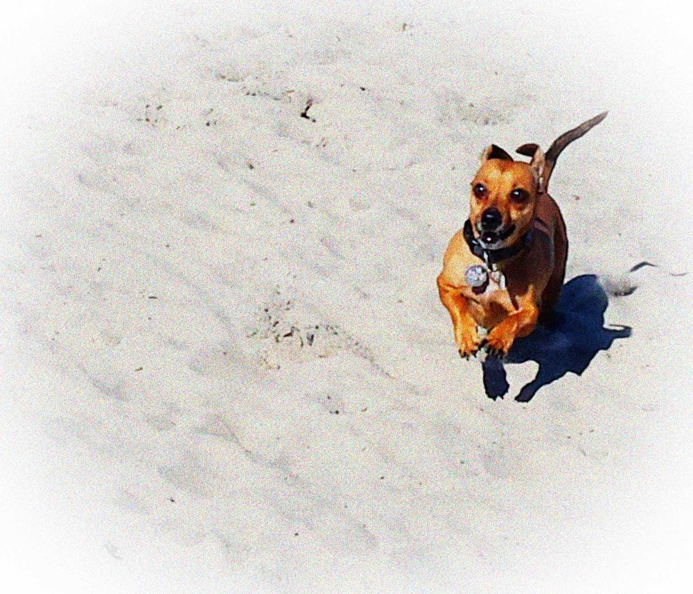 Be free! Leash free at Dog Beach!