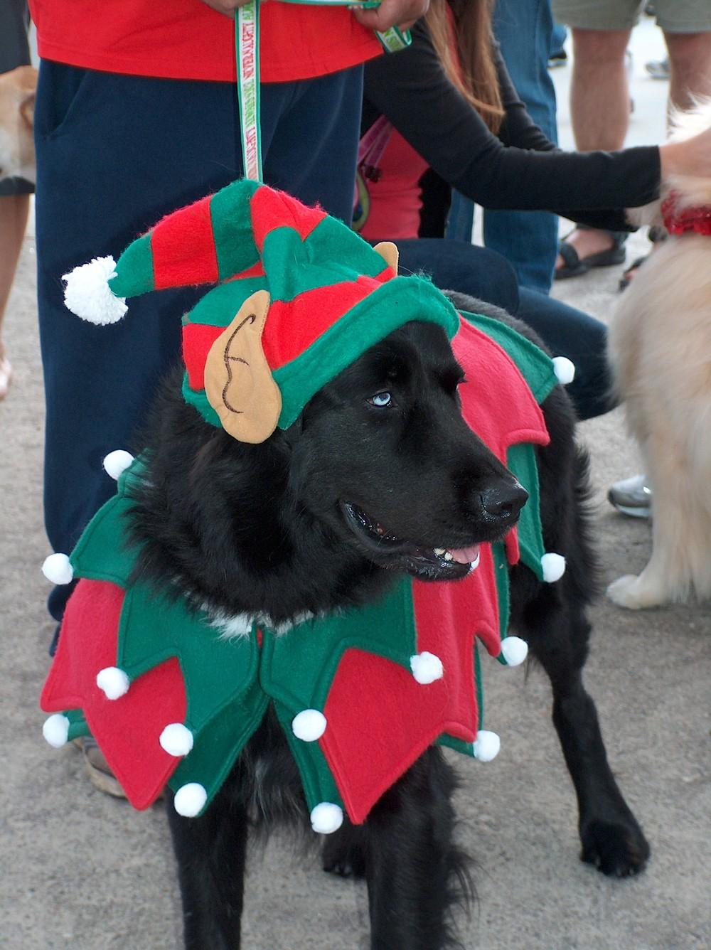 Elf Dog.JPG