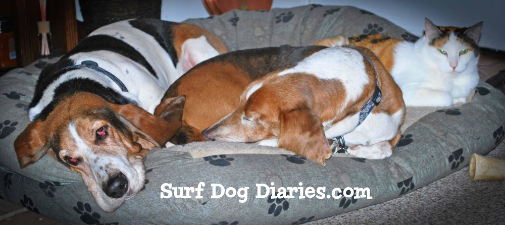 SurfDog Diaries graphic-Elvis, Dude and Tia .jpg