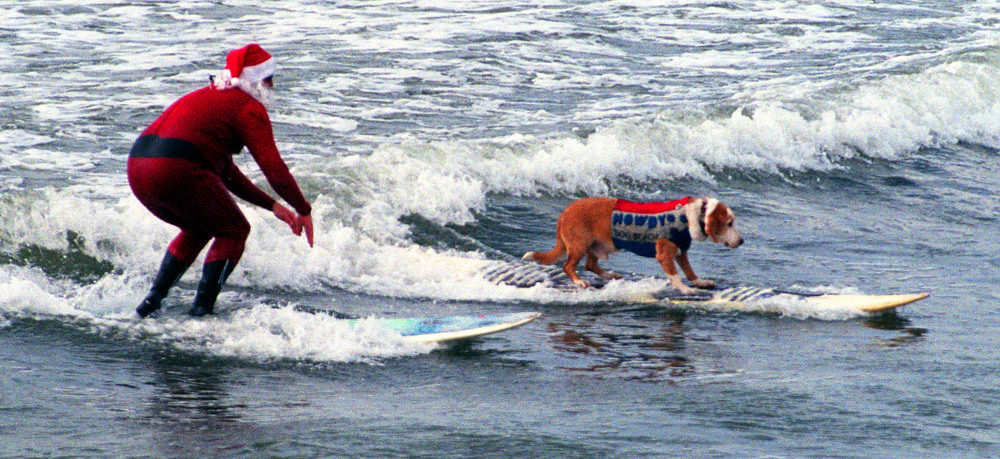 Sandy Claws at Dog Beach - our annual Christmas fundraiser at Dog Beach. Howdy Doody (here snaking Santa's wave.)