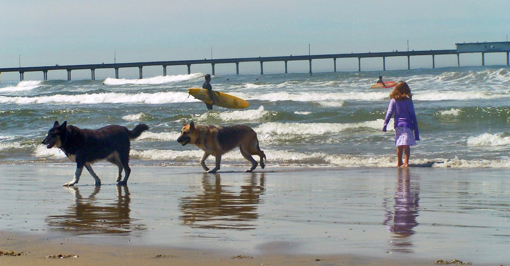 The epicenter of dog vacations - Dog Beach, in Ocean Beach San Diego - our old home beach.