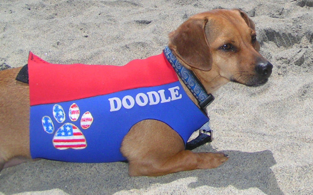 That's me in the sand at Dog Beach. My brother Dude and I were named after the king of Dog Beach, for the dudester.